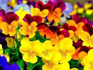 Flowers-flowers-35522645-1024-768